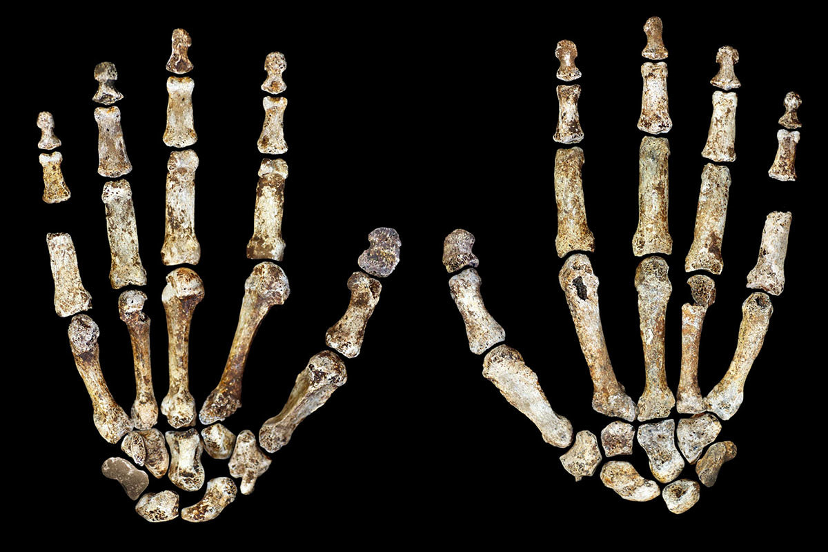 Homo naledi hands