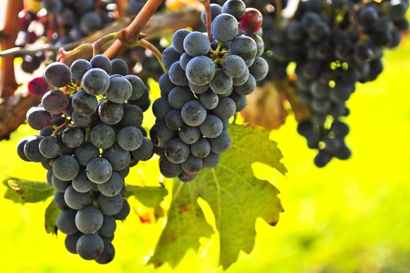 Le vin rouge et le chocolat peuvent vraiment conjurer la maladie d'Alzheimer?