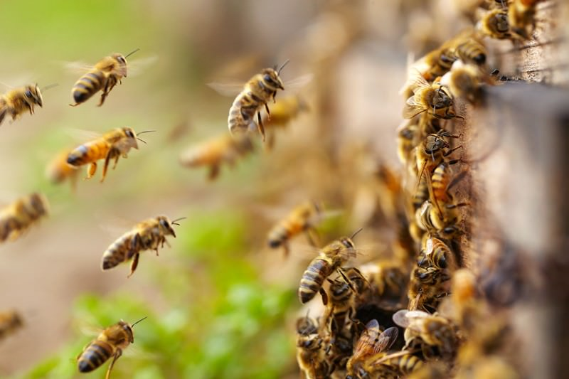 Bees win as US court rules against neonicotinoid pesticide