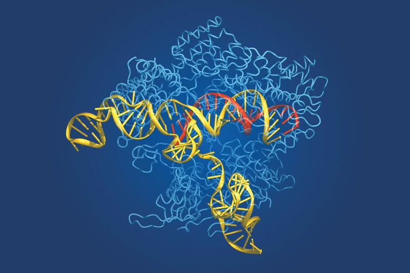 Gene editing: Bring it on
