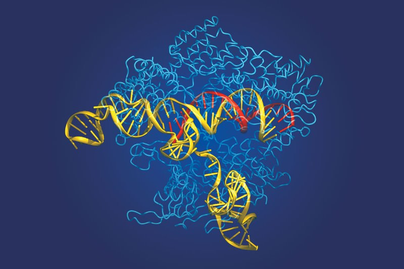 DNA-cutting enzymes could slice through gene editing patent spat