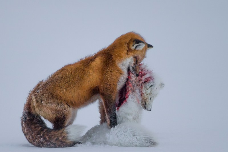 The best pictures from Wildlife Photographer of the Year 2015-16