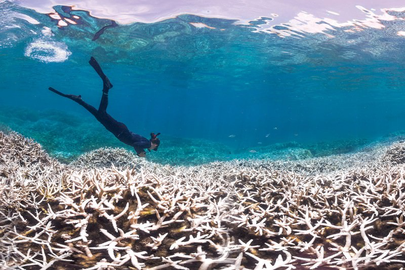 Global coral bleaching event: What you need to know