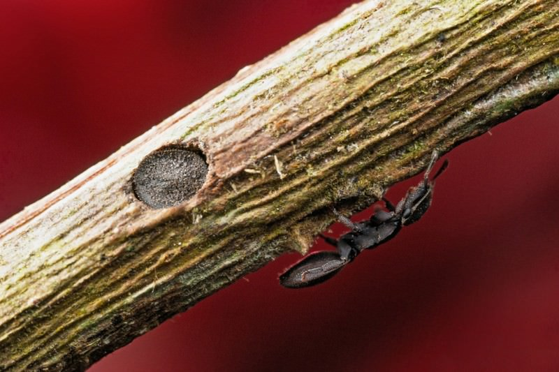 Zoologger: Ants that use their heads to lock down their nests