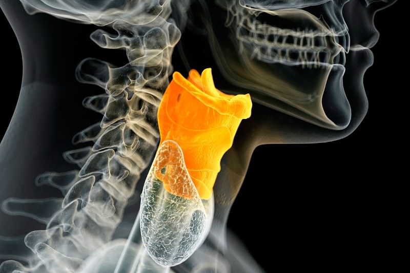 Human vocal cords built from scratch in world first