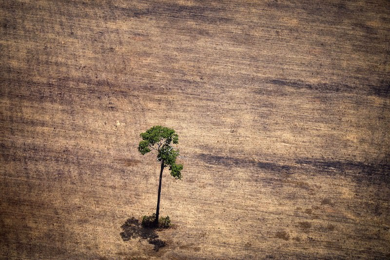 Big firms are still not acting on their deforestation promises