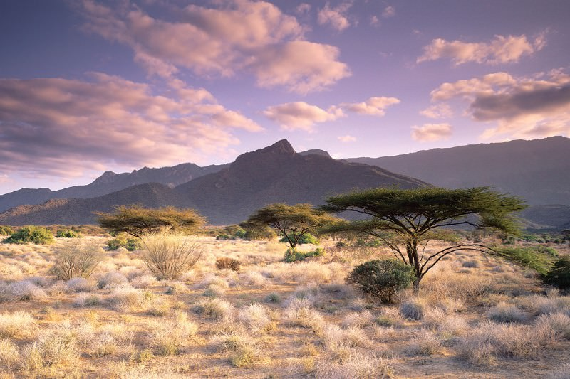Did climate change jump-start human evolution in East Africa?