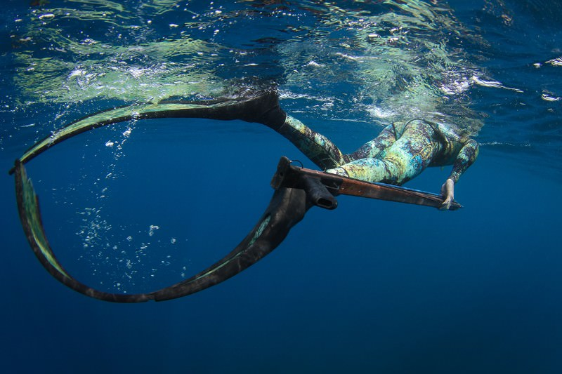 Free-diver enlisted to help tag twitchy hammerhead sharks