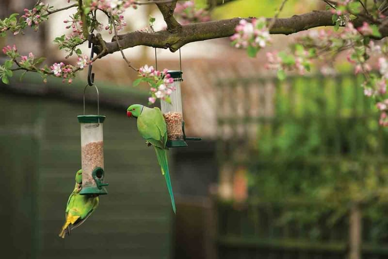 Exploring the world of parrots that dazzle and delight