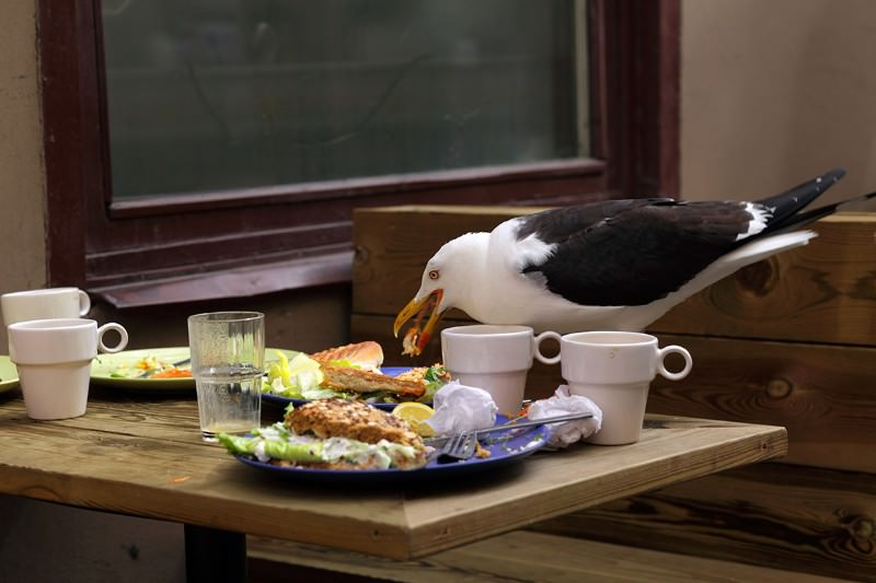 Birds prefer to eat at outdoor cafes with slow plate-clearing