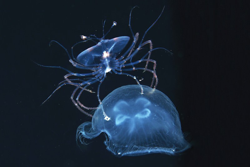 Deep-sea creatures float through black water at night