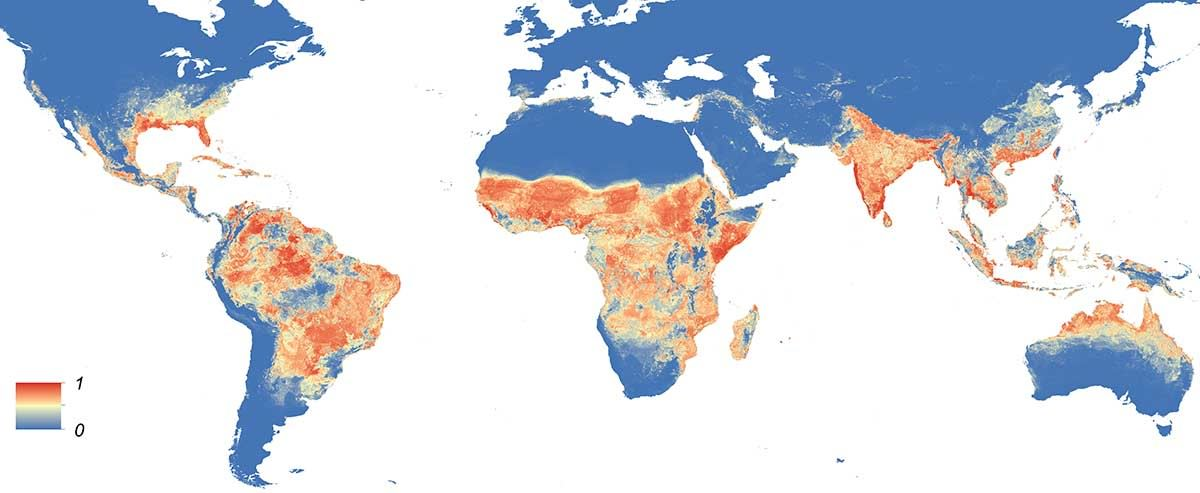 Global distribution map of Aedes Aegypti mosquitos that transmit Zika. The colour shows the probability of finding the mosquito, with red being more likely, blue being less likely