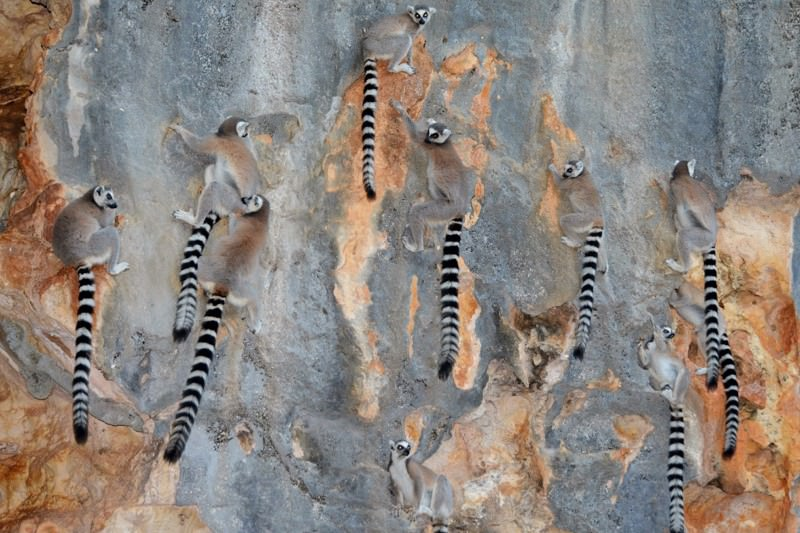 These baboons and lemurs have left the trees to live in caves