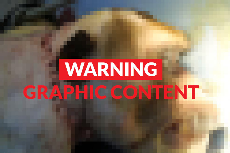 fig1b pixelwarning 800x534 - Monkey head transplant