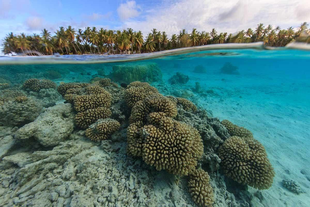 Generic coral