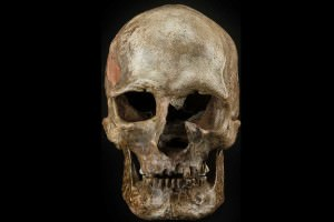 DNA was taken from ancient human bones, like this skull, from the Dolnte Vestonice burial site in the Czech Republic
