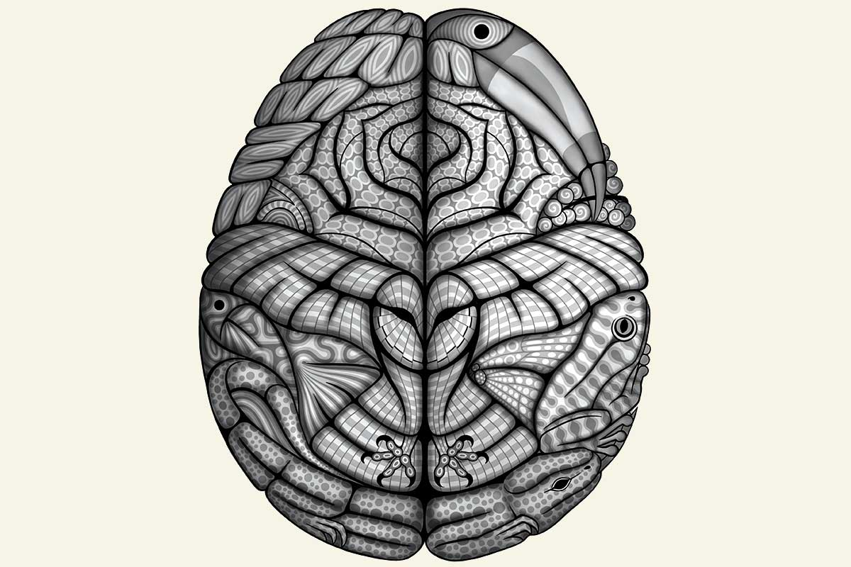 Nature's brain: A radical new view of evolution | New Scientist