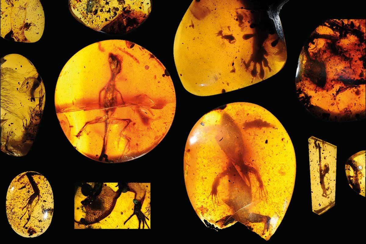 Lizards in amber