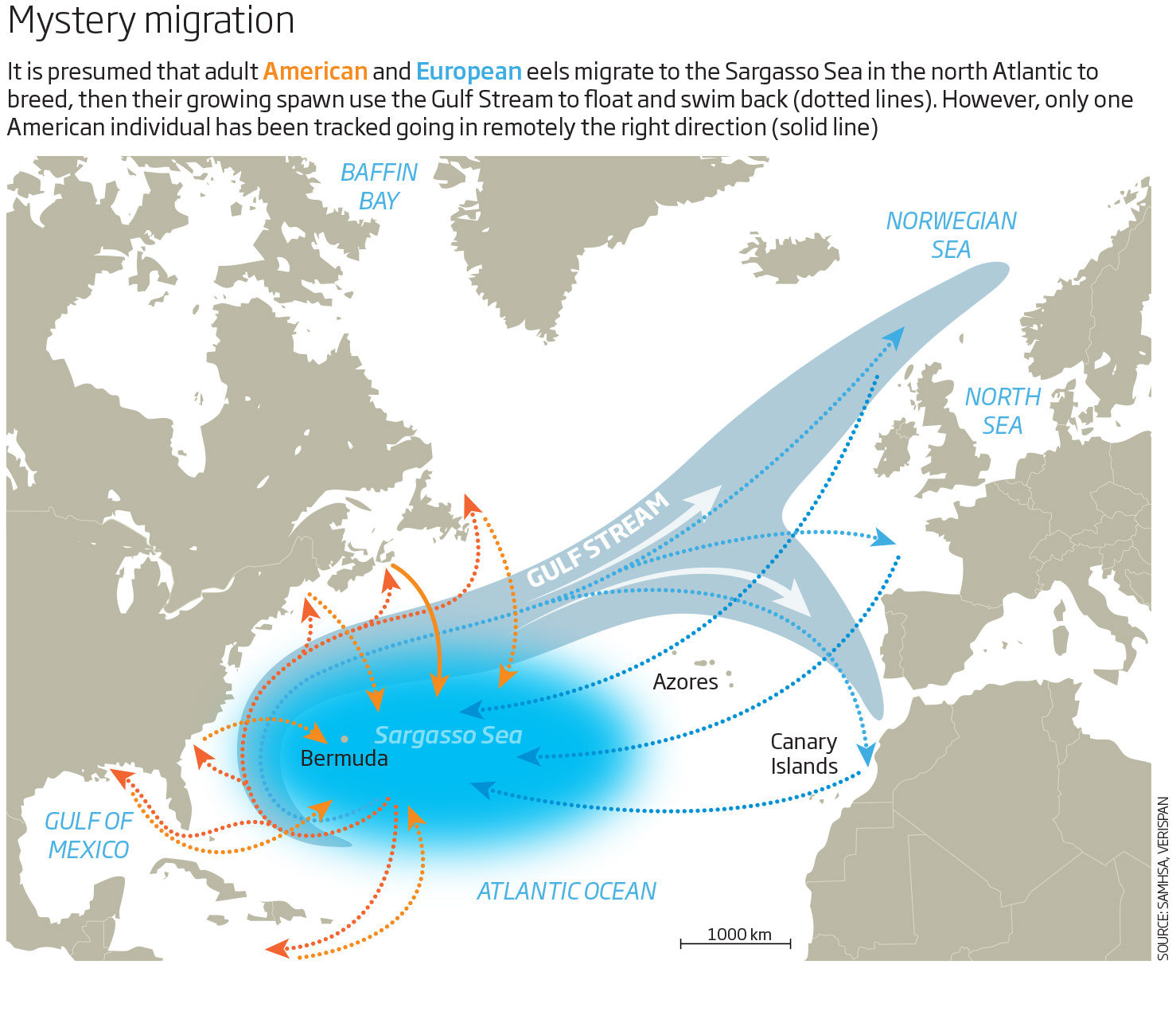 Mystery migration