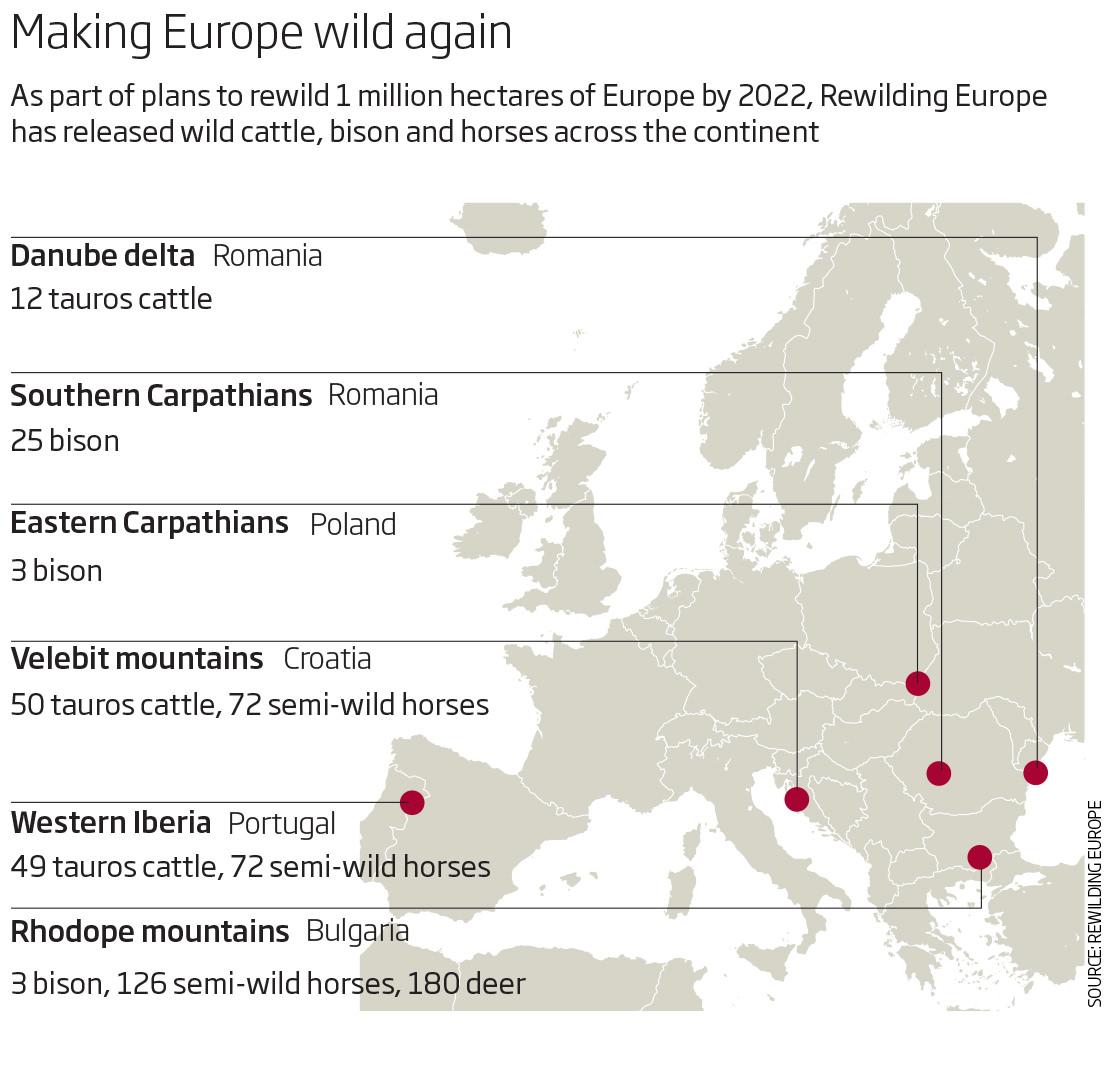 Making Europe wild again