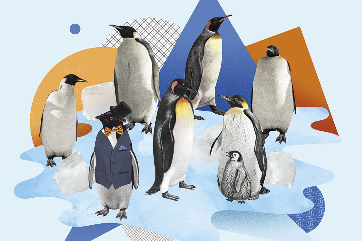 penguins artwork