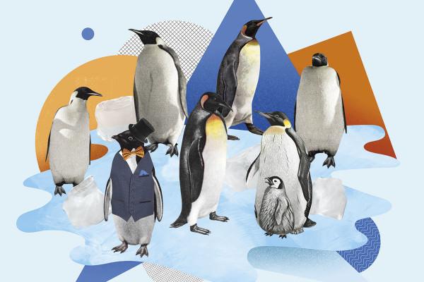 penguins artwork