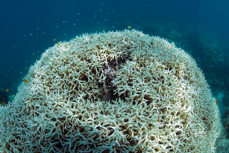 how to stop coral bleaching
