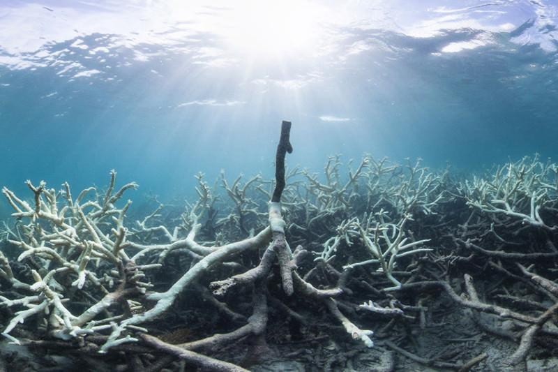 Coral-Bleaching-at-Lizard-Island2-1120x560