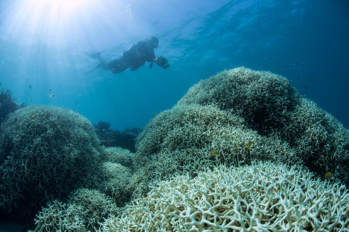 Coral-Bleaching-at-Lizard-Island5-1120x747