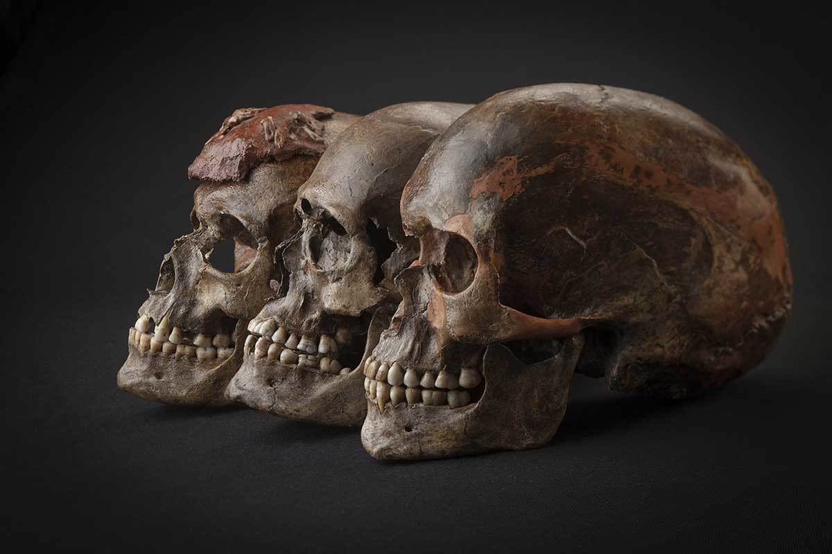Three skulls, black background