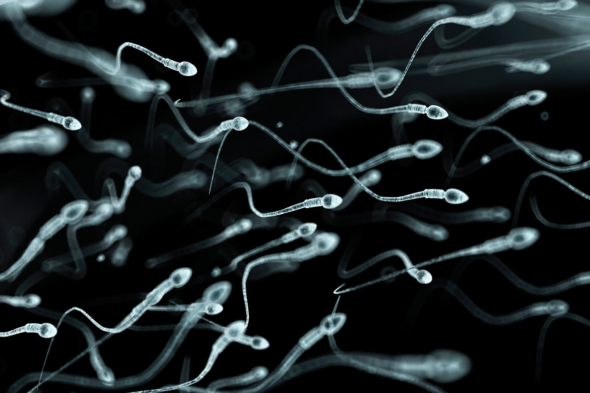 Is sperm smaller than a pinprick