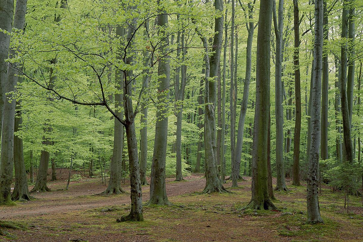 Trees Share Vital Goodies Through A Secret Underground