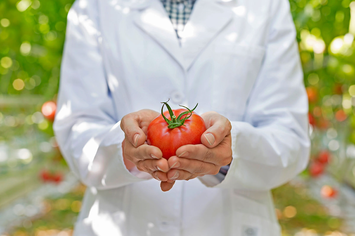 Person in a labcoat holding a tomato