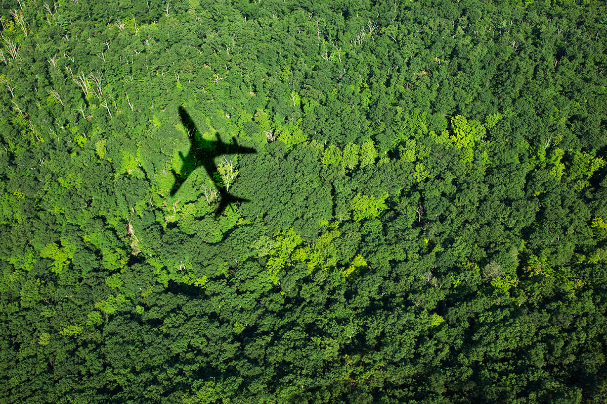 Aircraft shadow over forest