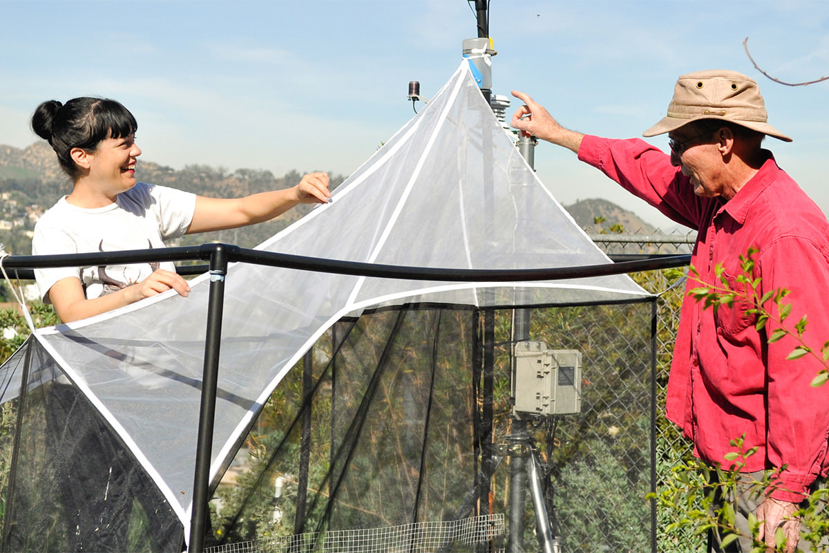 People using large tent-like pieces of netting
