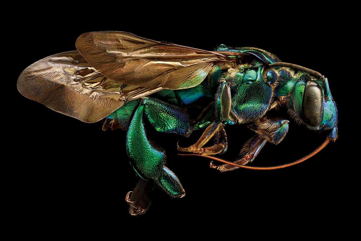 Insects Reveal An Alien Beauty In Huge Extreme Close Up