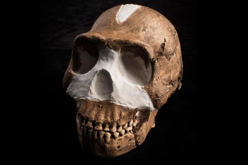 007_2.-Homo-naledi-skull.-John-Hawks-Wits-University