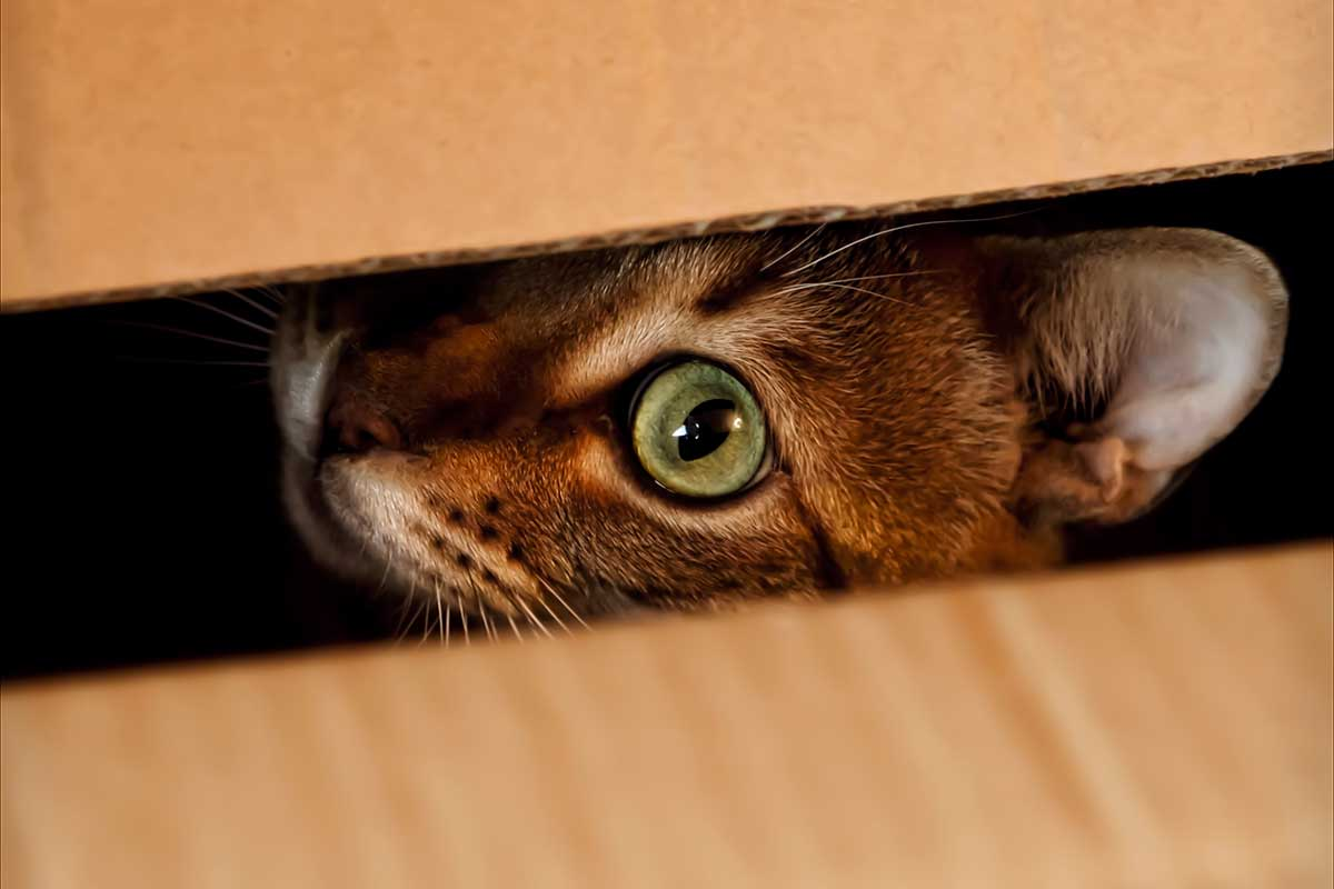 Schrödinger's cat alive and dead even after you saw it in half