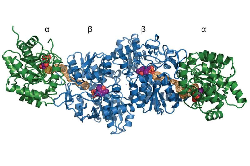 crystal structure of the reconstructed trytophan synthase complex