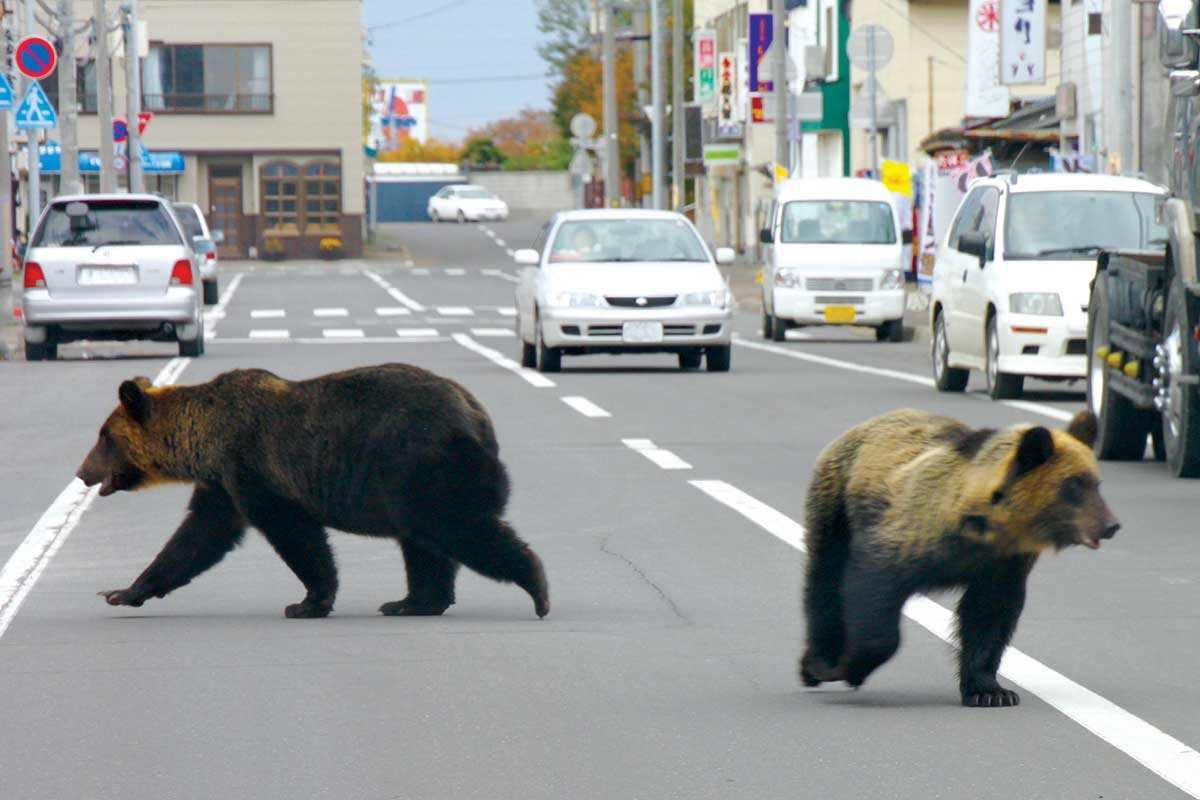bears road