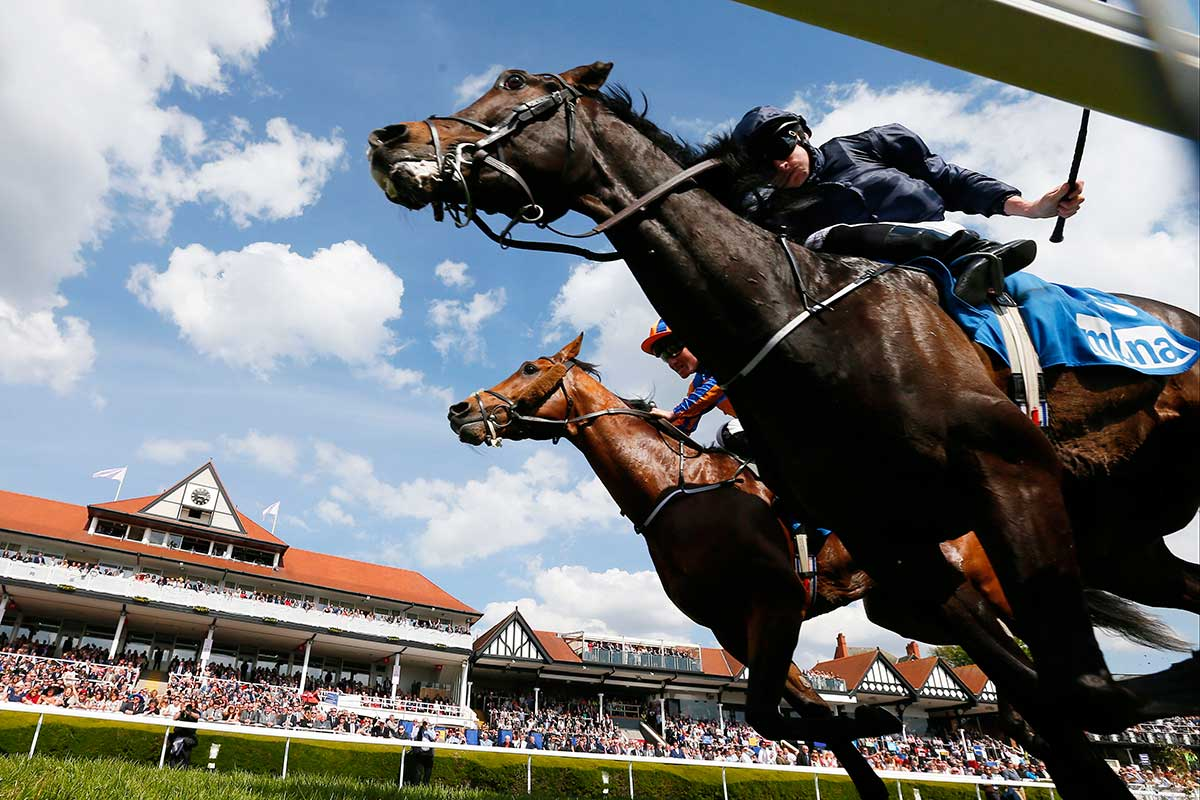 wearable device for racehorses could help prevent fatal
