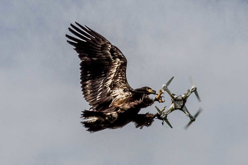 bird and drone