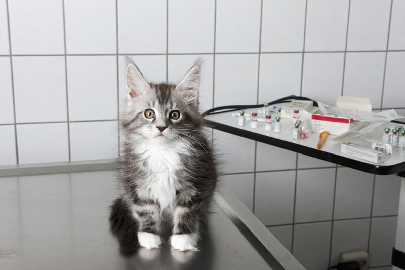 A kitten sat in a veterinary surgery in front of a tray of various medicines and equipment