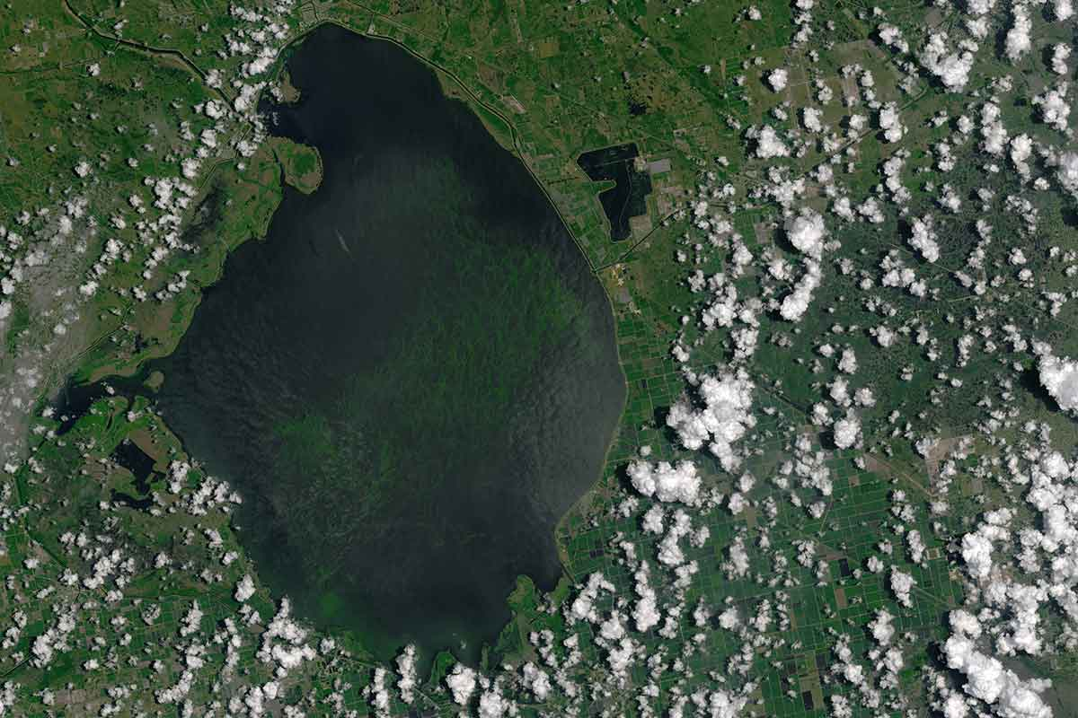 Satellite pic of giant algal bloom