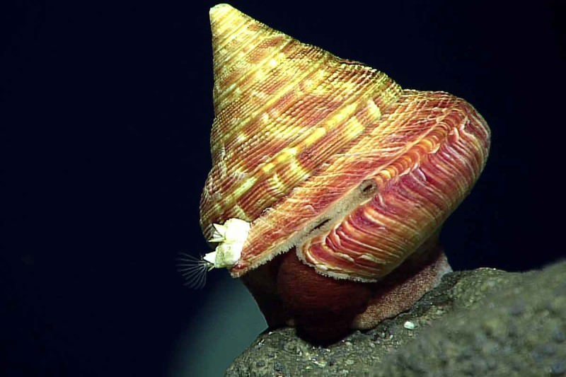 Unknown slit shell