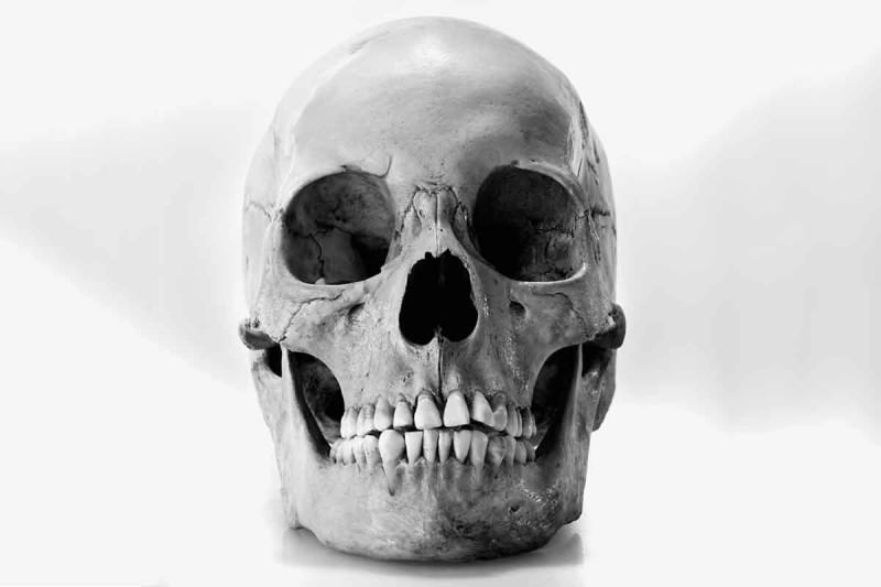 Hundreds of mystery human skulls sold on eBay for up to $5500 ...