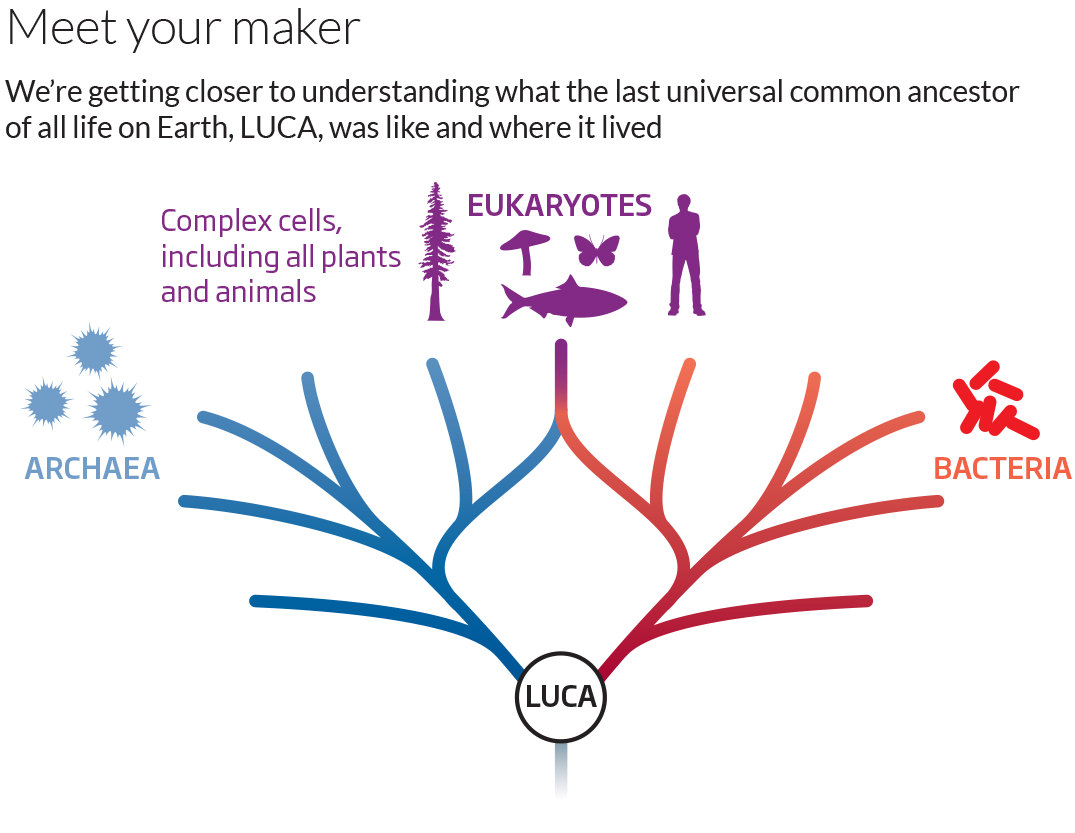 Graphic showing life branching out into bacteria, eukaryotes and archaea from LUCA