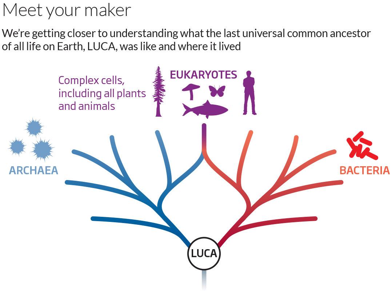 the last universal common ancestor (LUCA)