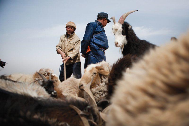 Mongolian herders