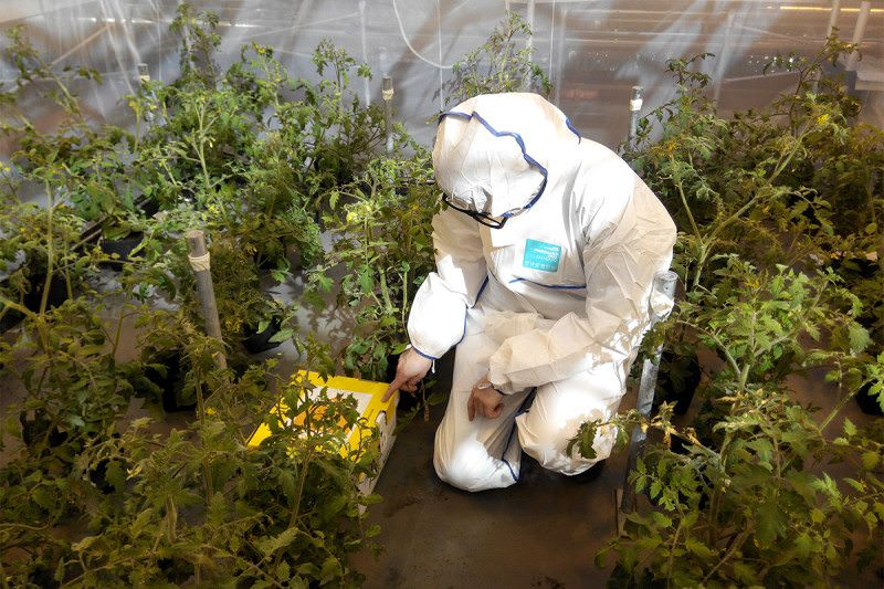 A person in a protective suit releasing bees into a greenhouse of plants